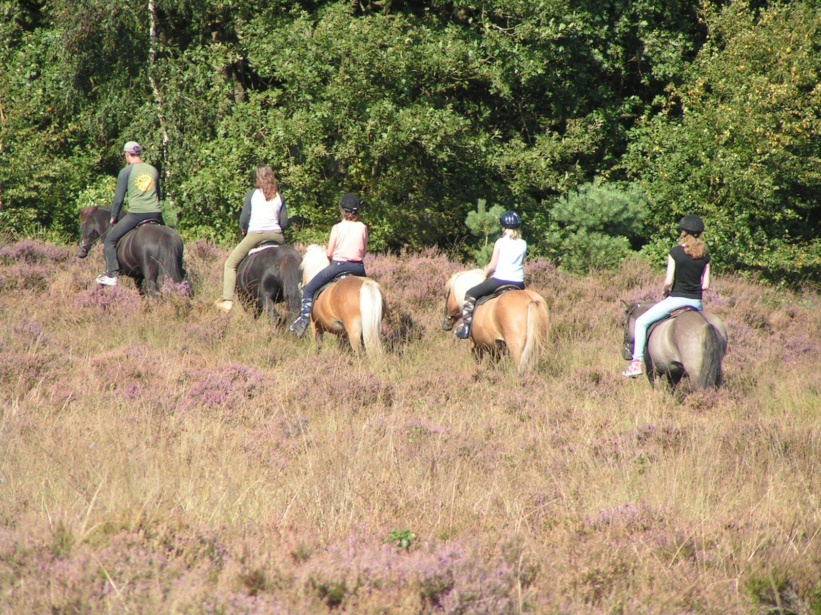 Paardrijden Schipborg Músarrindill